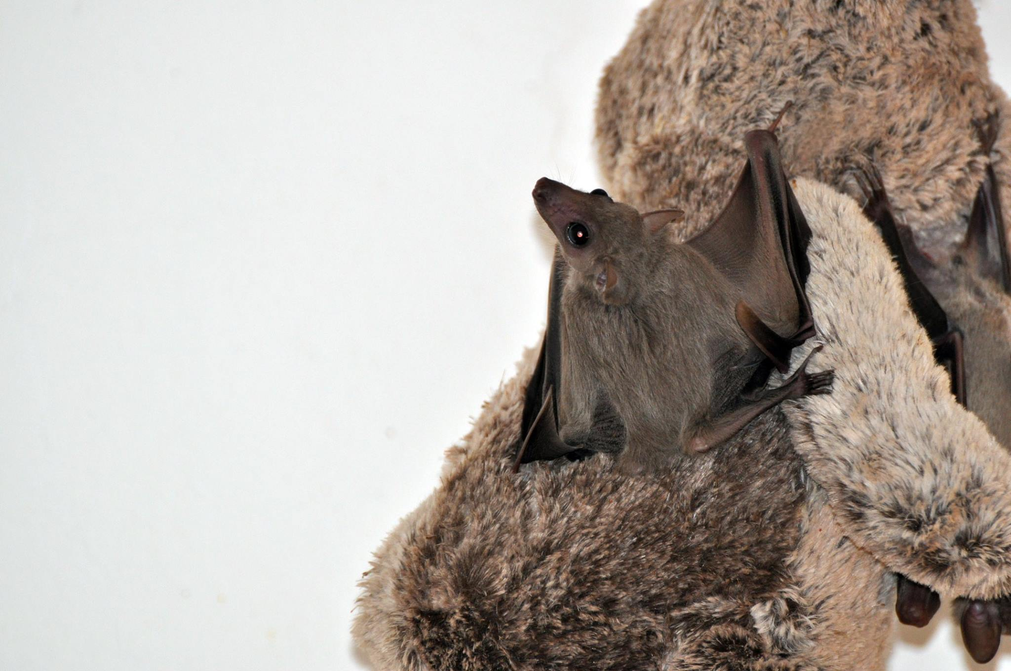 From the lab to a freedom life| The amazing story of dozen happy bats