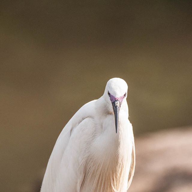 I dont have many shots of egrets lately, it can only means one thing, i need to look for my bathing suit
